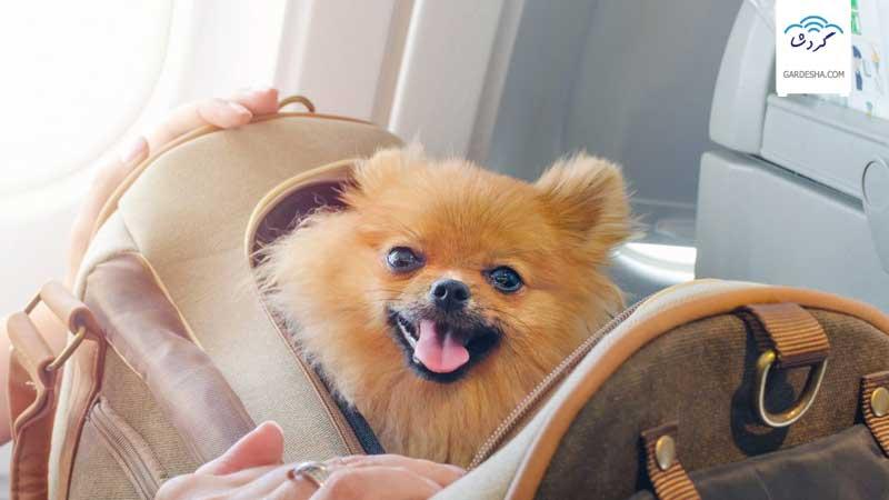 حمل حیوانات زنده در هواپیما