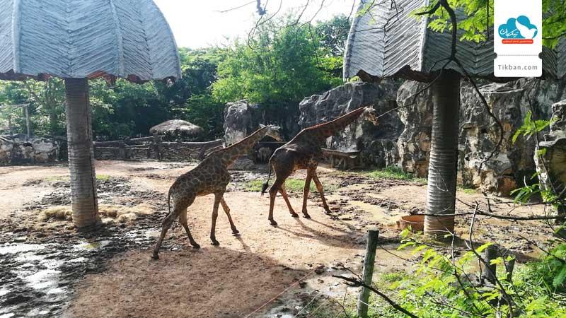 باغ وحش دوسیت
