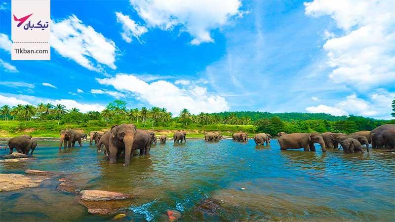 تور ارزان قیمت سریلانکا